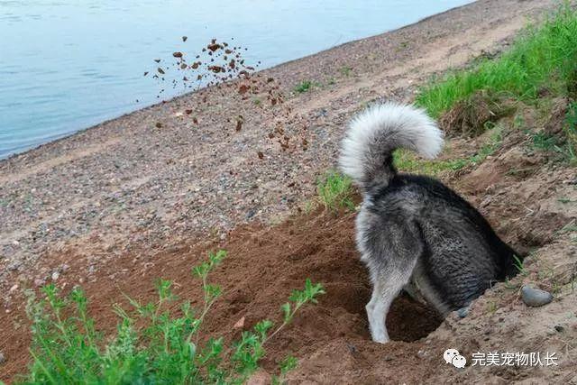"""狗狗的这些""""行为"""",你知道有什么含义吗?"""